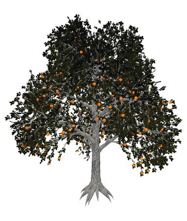 diospyros: Asian or japanese persimmon, diospyros kaki, tree isolated in white background - 3D render