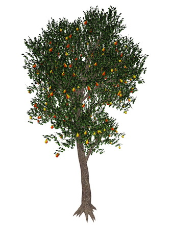 pyrus: Pear, pyrus communis, tree isolated in white background - 3D render
