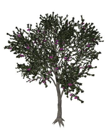 fruit tree: Blackthorn or sloe, prunus spinosa, tree isolated in white background - 3D render