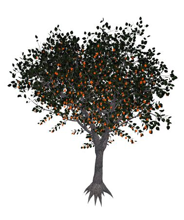 apricot tree: Apricot, prunus armeniaca, tree isolated in white background - 3D render