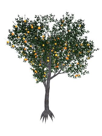 tree fruit: Peach, prunus persica, tree isolated in white background - 3D render