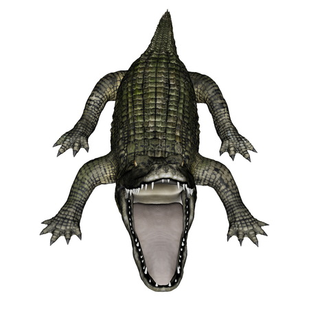agressive: Caiman  roaring isolated in white background - 3D render Stock Photo