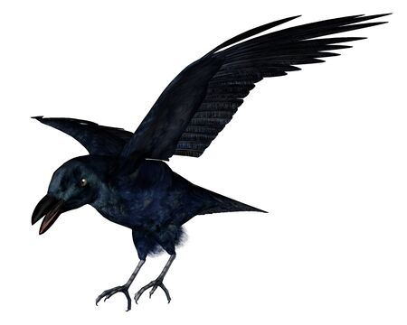 corvus: Black crow isolated in white background - 3D render Stock Photo