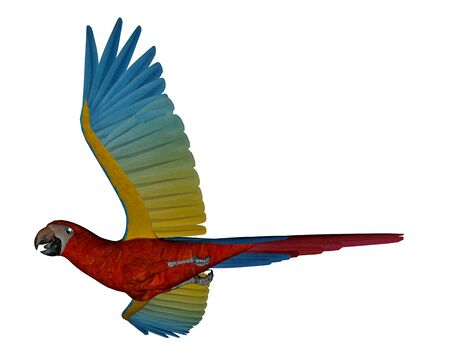 macaw: Scarlet macaw, parrot, flying isolated in white background - 3D render