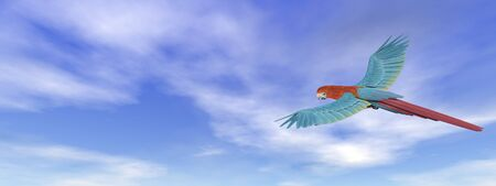 macaw: Scarlet macaw, parrot, flying flying in blue sky - 3D render