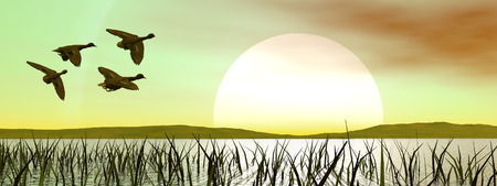 duck green: Flock of duck flying upon a pond with grass by green sunset