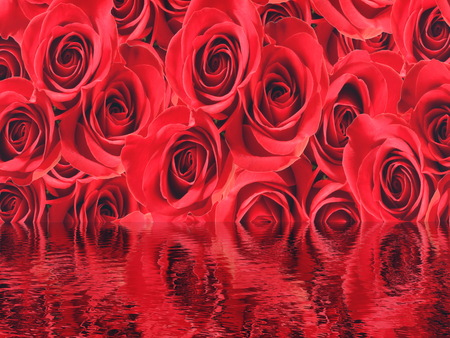 water reflection: Red beautiful roses background with water reflection Stock Photo