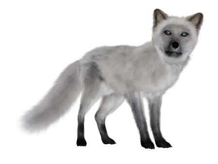 Renard blanc, debout, isolé dans un fond blanc - 3D render Banque d'images - 50967221