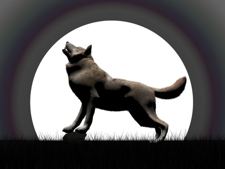 wold: Wold howling by full moon night - 3D render