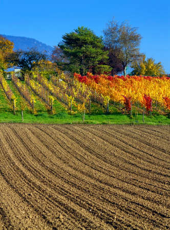 plough land: Colorful rural field by beautiful autumn day