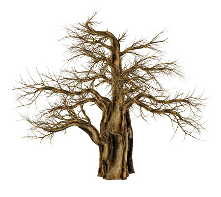 Baobab tree without leaves, adansonia digitata, isolated in white background - 3D render
