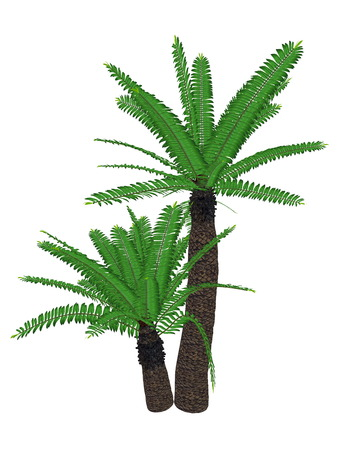 cycad: Breadtree, broodboom, eastern cape giant, bushmans river cycad or uJobane, encephalartos altensteinii, tree isolated in white background - 3D render