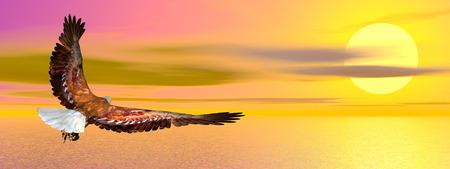 eagle flying: Eagle flying upon ocean by sunset - 3D render