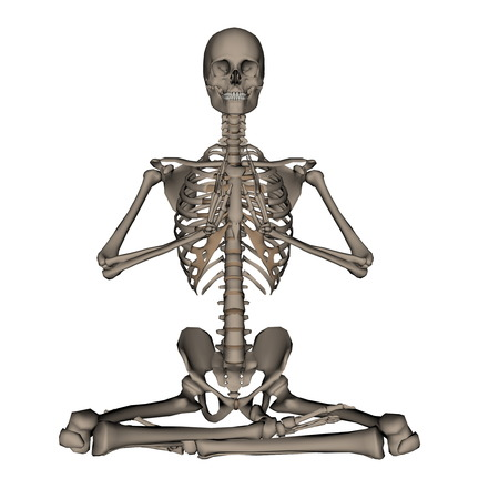 frontview: Frontview of human skeleton meditation isolated in white background - 3D render