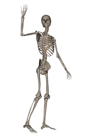 frontview: Frontview of human skeleton saying goodbye isolated in white background - 3D render Stock Photo