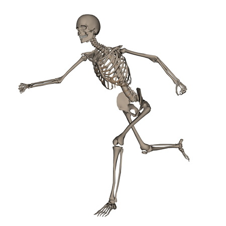 frontview: Frontview of human skeleton running isolated in white background - 3D render