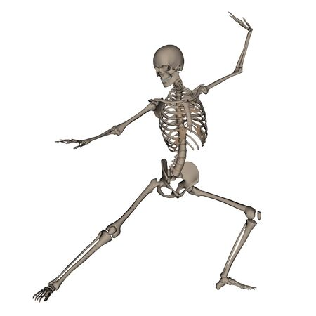 frontview: Frontview of human skeleton ready to fight isolated in white background - 3D render