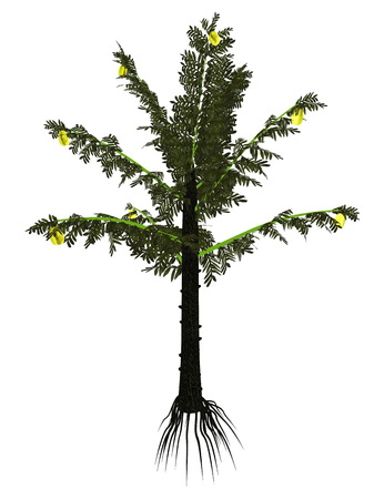 carboniferous: Alethopteris serli prehistoric tree isolated in white background - 3D render