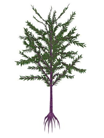 gondwana: Dicroidium prehistoric seed plant isolated in white background - 3D render