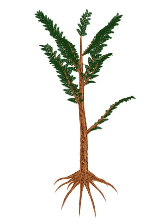 triassic: Pachypteris prehistoric plant isolated in white background - 3D render Stock Photo