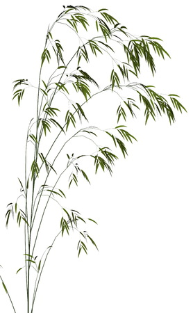 garden pond: Bamboo isolated in white background - 3D render