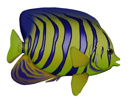 angelfish: Angelfish isolated in white background - 3D render