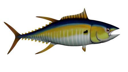 bluefin tuna: Tuna isolated in white background - 3D render