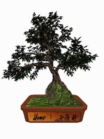 hornbeam: Hornbeam, carpinus betulus, tree bonsai isolated in white background - 3D render