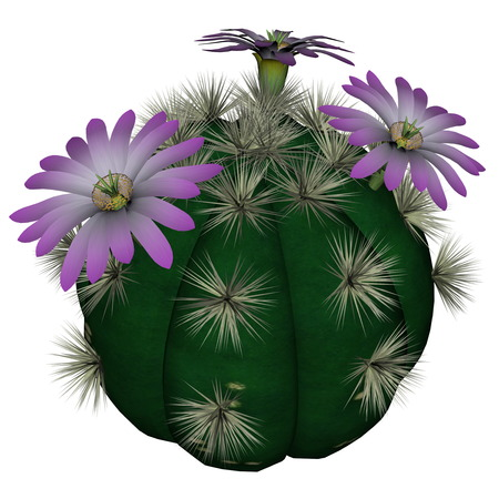 violet flowers: Spherical cactus with violet flowers isolated in white background - 3D render Stock Photo