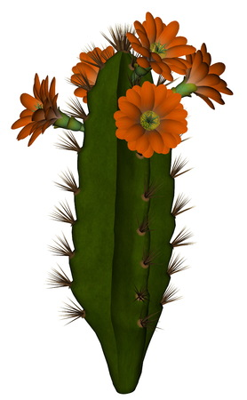 prickly: Tall cactus with red flowers isolated in white background - 3D render Stock Photo