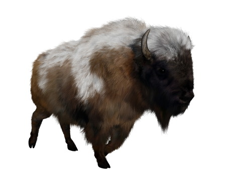 bison: American bison with snow isolated in white background - 3D render