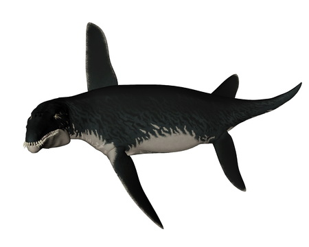 swooping: Liopleurodon prehistoric fish swooping isolated in white background - 3D render Stock Photo
