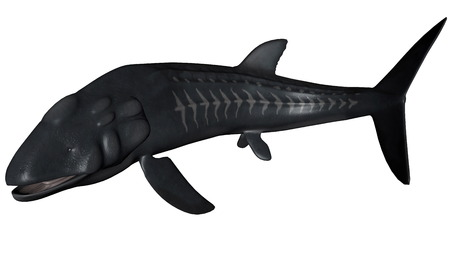 aside: Leedsichthys prehistoric fish turning aside isolated in white background - 3D render