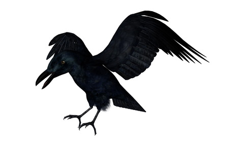Black crow flying on a white background - 3D render