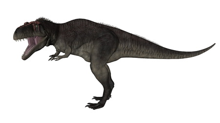 cretaceous: Tyrannotitan roaring isolated in white background - 3D render Stock Photo