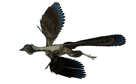 Archaeopteryx bird dinosaur flying isolated in white background - 3D render
