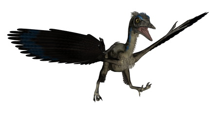 pterodactyl: Archaeopteryx bird dinosaur landing isolated in white background - 3D render Stock Photo