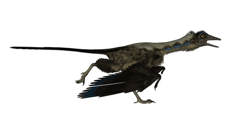 pterodactyl: Archaeopteryx bird dinosaur running isolated in white background - 3D render Stock Photo