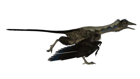 Archaeopteryx bird dinosaur running isolated in white background - 3D render Stock Photo