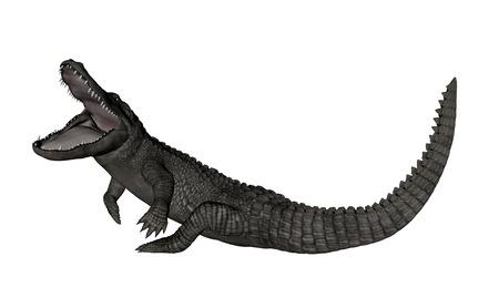 Crocodile roaring up - 3D render