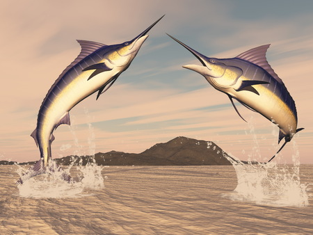 billfish: Marlin fishes danse by sunset - 3D render