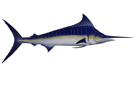 Marlin fish - 3D render