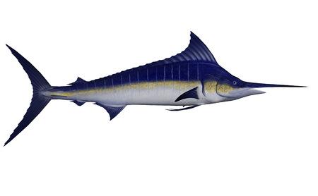 Marlin pez - procesamiento 3D Foto de archivo - 80829353