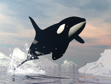 Killer whale jump - 3D render