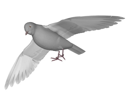 Dove flying - 3D render