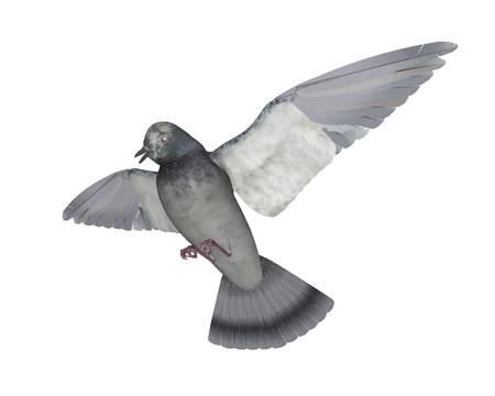 Taube fliegen - 3D render Standard-Bild - 88753893