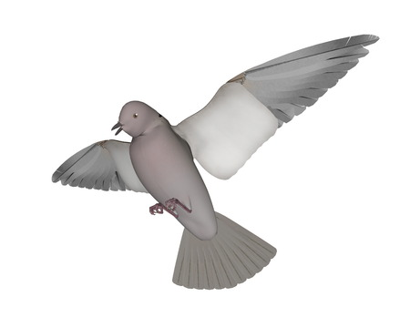 Pigeon flying - 3D render Stock Photo
