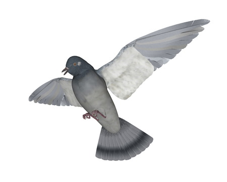 Taube fliegen - 3D render Standard-Bild - 87954921
