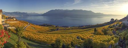 Panorama auf Lavaux Region, Waadt, Schweiz Standard-Bild - 89053724