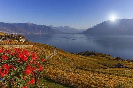 Lavaux Region, Waadt, Schweiz Standard-Bild - 89053729